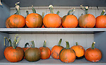 Pumpkins for sale on shelf