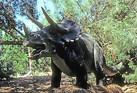 Pre-historic Animals: Triceratops--plant eater--late Cretaceous (to 63 million years). They traveled in herds, protected young by facing outward, like musk ox. Ht., 9.5 ft.; length, 25 ft.; 5 Tons.