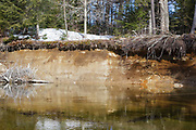 River bank erosion along the Swift River in the White Mountains, New Hampshire USA