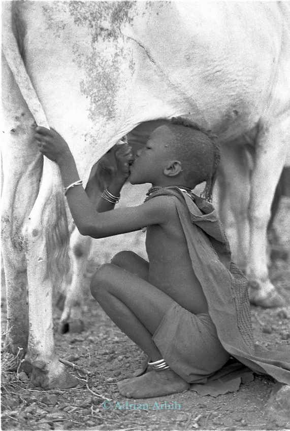 A Turkana boy drinks straight from then cow.  <br /> Kakuma, Turkana district, Northern Kenya.<br /> The turkana are completely reliant on their livestock and with the reduction of their rangle lands their whole lifestyle is in jeopardy.
