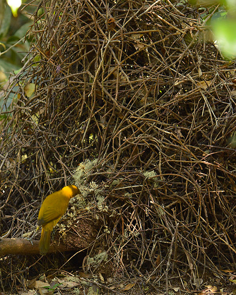 Arranging the Bower,<br />