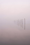 Row of wood pilings in calm water with reflections