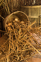 Basket of dried bulbs and flowers at Pharsalia