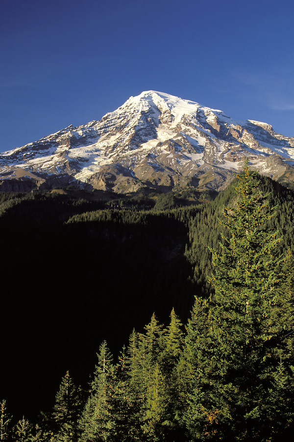 Mount Rainier framed by trees, from Rucksecker Point, Mount Rainier National Park, Lewis County, Pierce County, WA