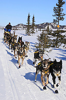 Hans Gatt on the trail just prior to the ghost-town checkpoint of  Iditarod during the 2011 Iditarod race..