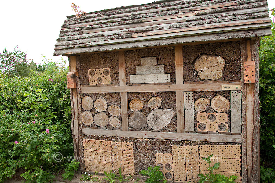 Insekten-Hotel, Insektenhotel, hohle Schilfstängel, Baumscheiben mit Bohrlöchern, Steine mit Bohrlöchern sowie ein Lehmangebot bieten Nistmöglichkeiten für Wildbienen, Mauerbienen und solitäre Wespen