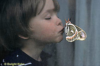 LE26-038z   Cecropia Moth - child kissing adult that landed on screen  - Hyalophora cecropia