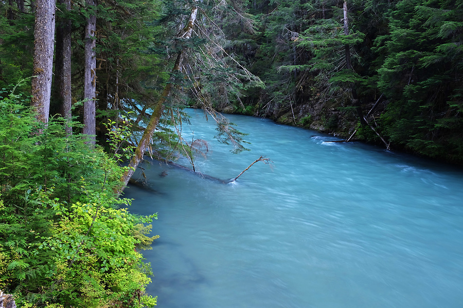 Thunder Creek flowing through old growth forest, North Cascades National Park, Washington State, USA