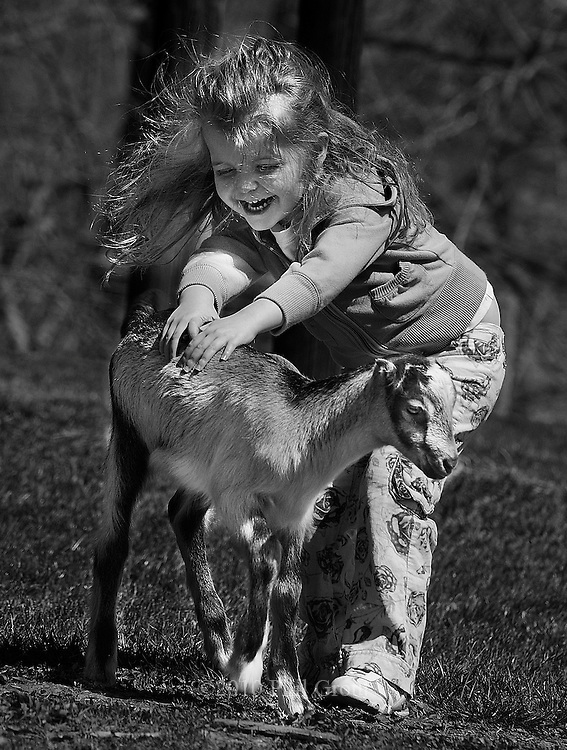 """Photo by Phil Grout..Three-year old Jordanna Gasparini of Monkton throws herself.into Ag Day at Hereford High School and gives a three-week old.""""La Mancha"""" kid goat a two-handed pet with lots of laughter too..Jordanna and her family were on hand for the third annual Future.Farmers of America Ag Day."""