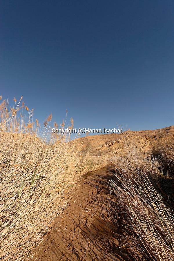 Israel, Negev. Ein Saharonim in Ramon crater