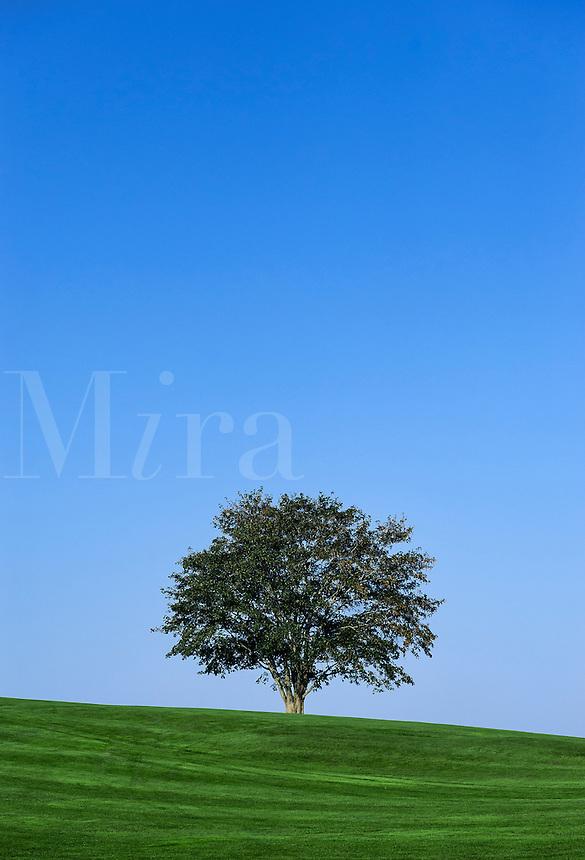 Healthy tree.