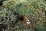 Atlantic Puffin (Fratercula arctica) at nest burrow, Skomer Island National Nature Reserve, Skomer Island, Pembrokeshire, Wales, United Kingdom