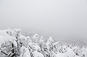 Whiteout conditions from the Willey Range Trail in the White Mountains, New Hampshire USA during the winter months.