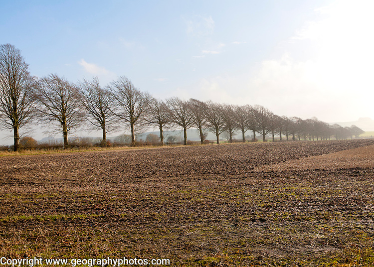 A line of leafless winter trees on field boundary, near Wroughton, Wiltshire, England, UK