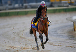 November 1, 2018: West Coast, trained by Bob Baffert, exercises in preparation for the Breeders' Cup Classic at Churchill Downs on November 1, 2018 in Louisville, Kentucky. Michael McInally/Eclipse Sportswire/CSM