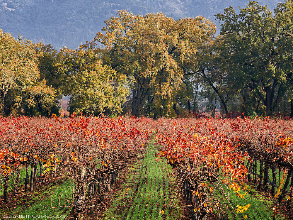 Autumn Oaks & Vines