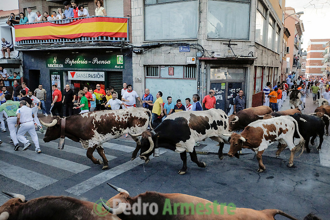 Participants run in front of El Estoque's bulls during the bull run of the San Sebastian de los Reyes Festival, near Madrid, on august 30, 2014. © Pedro ARMESTRE
