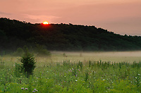 The sun rises above the tree line on a fog inversion grassland at Springbrook Prairie Forest Preserve in DuPage County, Illinois
