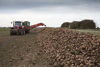 Side discharge trailer carting sugar beet away from the harvester <br /> Picture Tim Scrivener 07850 303986<br /> &hellip;.covering agriculture in the UK&hellip;.