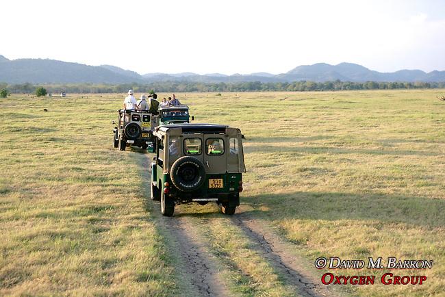 Earthwatchers Viewing Elephants, Minneriya National Park