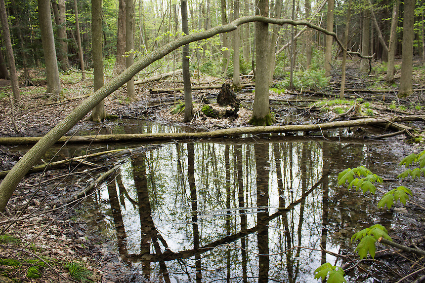 Reflections in Groundwater in Altona Forest