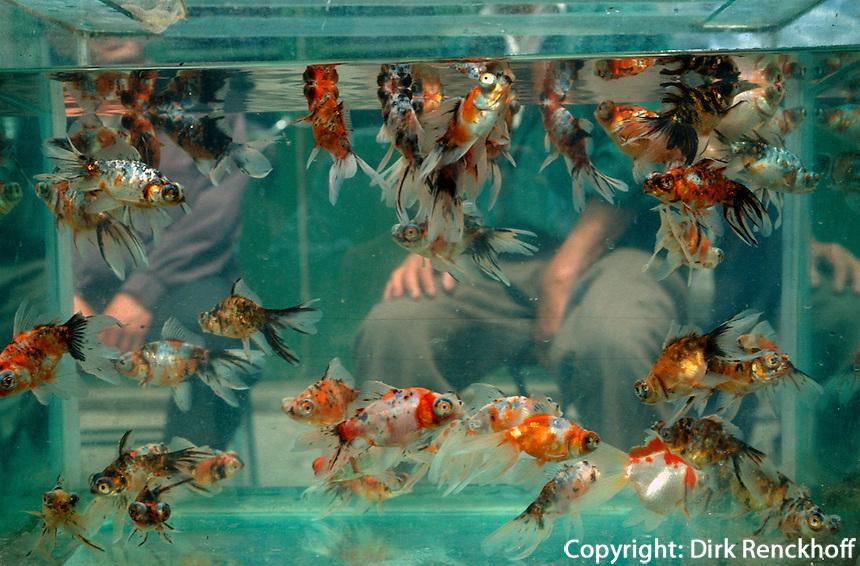 China, Peking, auf dem Zierfischmarkt