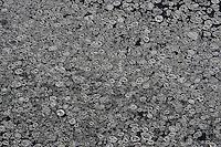 Eis auf der Elbe: EUROPA, DEUTSCHLAND, SCHLESWIG- HOLSTEIN, NIEDERSACHSEN(EUROPE, GERMANY), 08.01.2009:  Eisschollen auf der Elbe bei Geesthacht, rund, bizarre Form, Deutschland, Schleswig, Holstein, Eis, Winter, kalt, Kaelte, vereister, Fluss, Natur, vereist, vereiste, eisig, Elbe, Wasser, gefroren, frieren, Eisscholle, Eisschollen, Scholle, Schollen, Wetter, zugefroren, Form, Luftbild, Luftansicht, Luftaufnahme # aerial photo, aerial photograph, air opinion, bleak, chilliness, chillingly, chillness, cold, coldly, coldness, cool, eau, elbe, floe, floes, flow, fluency, flux, form, freezed, frigid, frigidly, frostiness, frozen, frozen over, gelid, gelidly, germany, glacial, glacially, ice, iced, icily, iciness, icy, nature, river, to be cold, unloving, unlovingly, water, weather, winter, wintertide, wintertime # - .c o p y r i g h t : A U F W I N D - L U F T B I L D E R . de.G e r t r u d - B a e u m e r - S t i e g 1 0 2, .2 1 0 3 5 H a m b u r g , G e r m a n y.P h o n e + 4 9 (0) 1 7 1 - 6 8 6 6 0 6 9 .E m a i l H w e i 1 @ a o l . c o m.w w w . a u f w i n d - l u f t b i l d e r . d e.K o n t o : P o s t b a n k H a m b u r g .B l z : 2 0 0 1 0 0 2 0 .K o n t o : 5 8 3 6 5 7 2 0 9.V e r o e f f e n t l i c h u n g  n u r  m i t  H o n o r a r  n a c h M F M, N a m e n s n e n n u n g  u n d B e l e g e x e m p l a r !.
