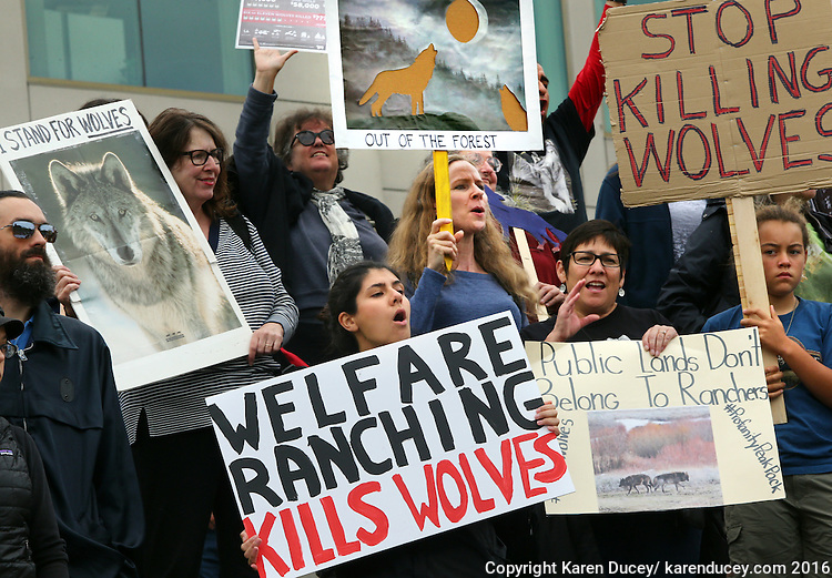 Protesters rally outside the Washington Department of Fish and Wildlife (WDFW) headquarters in Olympia, Washington against the killing of the Profanity Peak wolf pack in eastern Washington on September 1, 2016. (photo © Karen Ducey Photography)