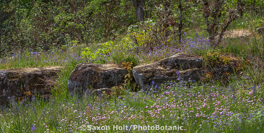 Rock ledge with wildflowers; Camassia Nature Preserve, The Nature Conservancy protected park, Portland Oregon