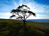 A silhouetted tree with the sun glinting through the branches in the late afternoon. This is up on the hill overlooking Trawscoed and the Ystwyth Valley down to Aberystwyth.<br />