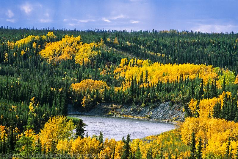 Gulkana river, autumn colored birch and aspen trees, Alaska