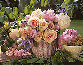 Interlitho, Alberto, FLOWERS, photos, basket, roses, KL16371,#f#
