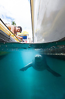 A tourist watches a Hawaiian monk seal swimming past the boats in Lahaina Harbor, Maui.