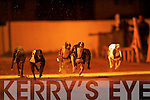 LEADER OF THE PACK: Strawberry Leaf leads the pack to win the Nolan's V.T.N. Test Centre A7 Sweepstake Final over Connor Pass Joe 2nd and Feora Mal 3rd at the Kingdom Greyhound Stadium, Tralee on Saturday night.   Copyright Kerry's Eye 2008