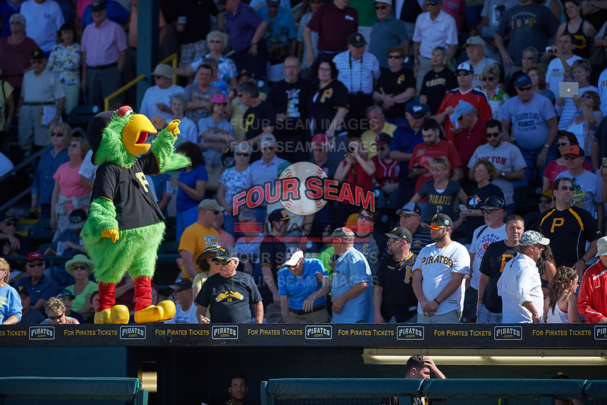 General view of a Pittsburgh Pirates mascot, The Pirate Parrot, interacting with fans during a Spring Training game against the Boston Red Sox on March 9, 2016 at McKechnie Field in Bradenton, Florida.  Boston defeated Pittsburgh 6-2.  (Mike Janes/Four Seam Images)