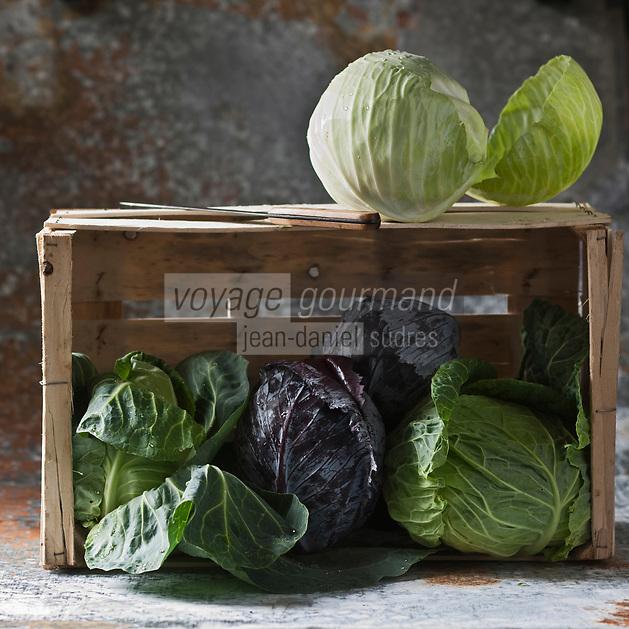 Gastronomie Générale:l Chou pointu, Chou rouge, Chou pommé et Chou blanc - Stylisme : Valérie LHOMME