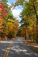 Autumn Road2 - Loved this windy road as it draws the eyes down the path just as the sun light peaked through the tree to bring out enough light to enhance the fall colors in a vertical format. We left this area and then came back after a couple days later and wow the roads were alive with color. I had read that Arkansas was picked as one of the states with the best fall colors and they were not wrong. These windy roads were full of color. From the tall pines and all the different maples, and so many other colorful trees it was a stunning landscape site to see.