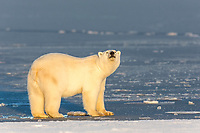 Beaufort Sea, Arctic National Wildlife Refuge, Alaska.