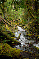 Stream on the Olympic Peninsula, Washington.