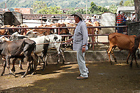 Monthly agricultural fair in the Town of Tamesis July 10, 2012.  Photo by Kena Betancur / VIEWpress..
