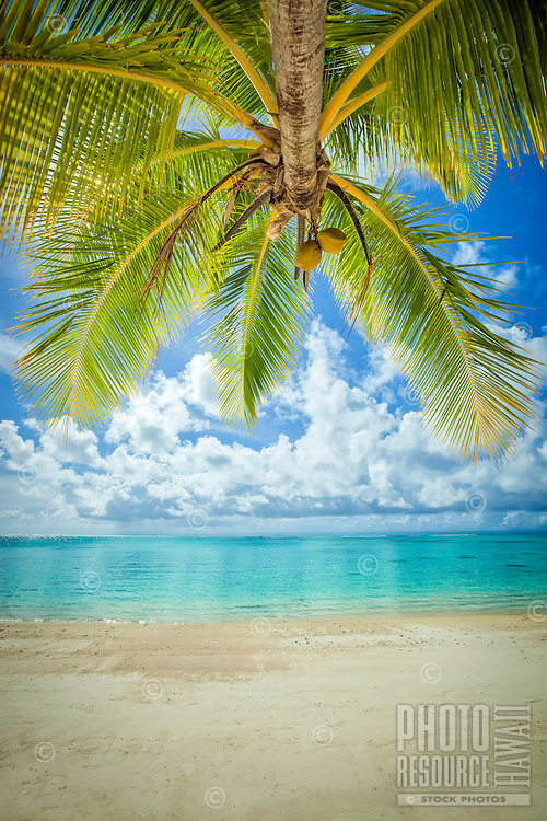 View of the ocean from under a coconut tree at Amuri Beach, Aitutaki Island, Cook Islands.