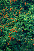 Tulip trees, royal palms<br />