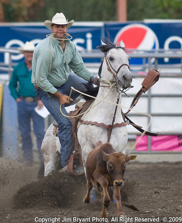 Jerrad Hofstetter, from Portales, NM chases a calf during the Tie Down Roping at the Kitsap County Fair and Stampede  held Aug. 26 to Aug. 30, 2009 in Silverdale, WA.  Jim Bryant Photo. All Right Reserved. © 2009