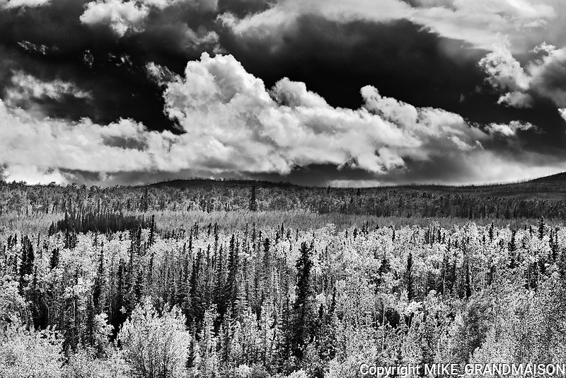 Boreal forest along the Klondike Highway<br />Pelly Crossing <br />Yukon<br />Canada