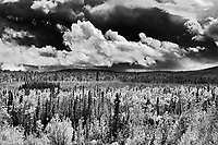 Boreal forest along the Klondike Highway<br />