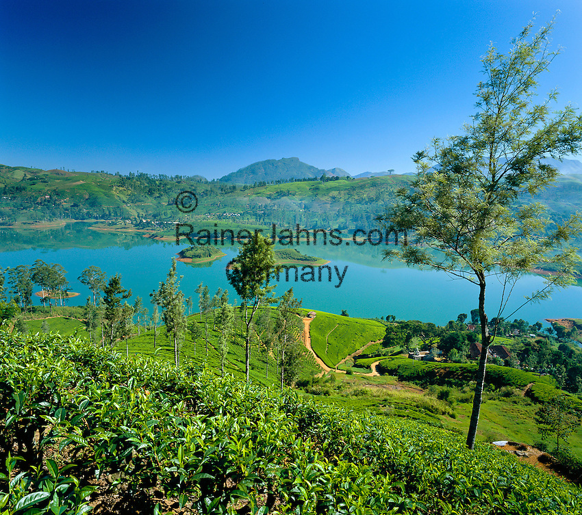 Sri Lanka, near Nuwara Eliya: Tea Plantation   Sri Lanka, bei Nuwara Eliya: Teeplantage