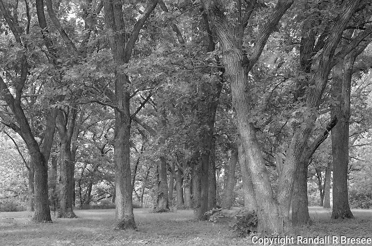 &quot;Oak Grove&quot; Pillsbury Crossing, Kansas<br />
