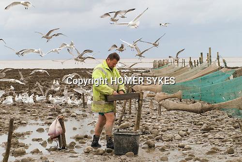 The Last Mudhorse Fishermen. UK 2008. The Sellick family, Stolford, Bridgewater Bay, Somerset.