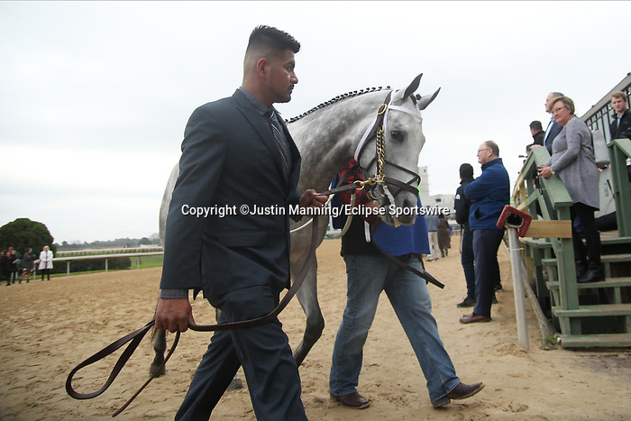 February 17, 2020: Silver Prospector (2) before the running of the Southwest Stakes at Oaklawn Racing Casino Resort in Hot Springs, Arkansas on February 17, 2020. Justin Manning/Eclipse Sportswire/CSM