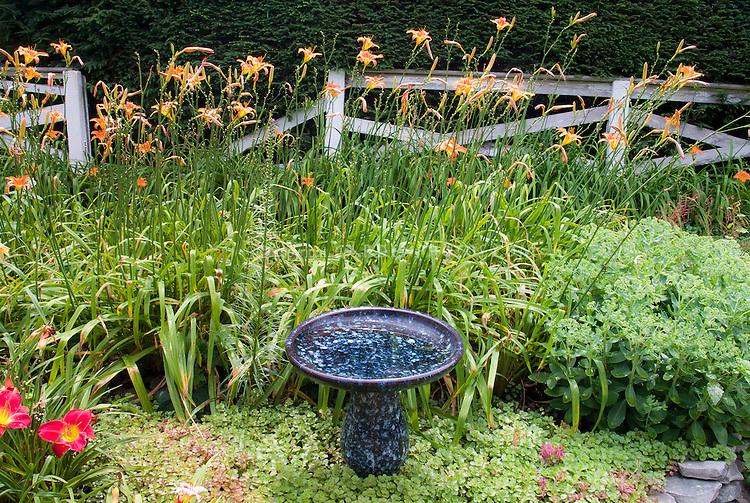 Ceramic blue mottled birdbath, with daylilies, sedums, vintage fence